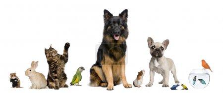 Photo pour Groupe d'animaux ensemble devant fond blanc - image libre de droit