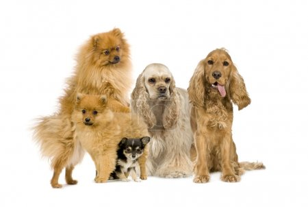 Group of dog