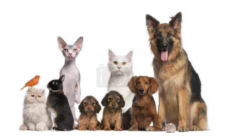 Group of pets: dog, cat, bird, rabbit