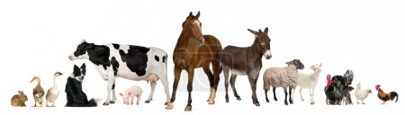 Photo for Variety of farm animals in front of white background - Royalty Free Image