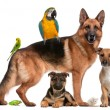 Group of pets sitting in front of white background...