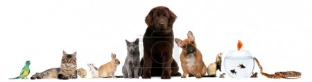 Photo for Group of pets sitting in front of white background - Royalty Free Image