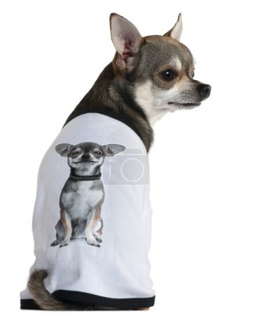 Chihuahua dressed with a t-shirt with a photo of himself, 3 years old, in front of white background