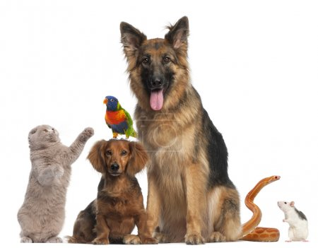 Group of animals in front of white background...