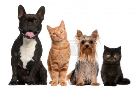 Photo for Group of cats and dogs sitting in front of white background - Royalty Free Image