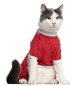 Cat dressed in red sitting in front of white background