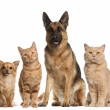 Group of dogs and cats sitting in front of white b...