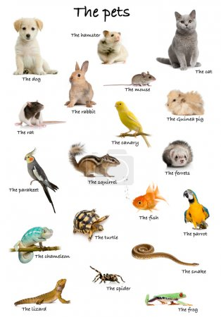 Photo for Collage of pets and animals in English in front of white background, studio shot - Royalty Free Image