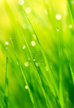 Photo pour Gouttes de rosée sur l'herbe verte au soleil - image libre de droit