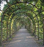 Garten-Wege, bewaldet von ranken
