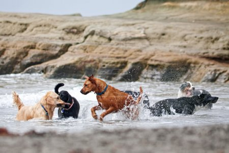 A group of dogs of different breeds playing in the...