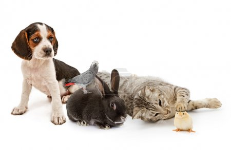 Group of common household pets