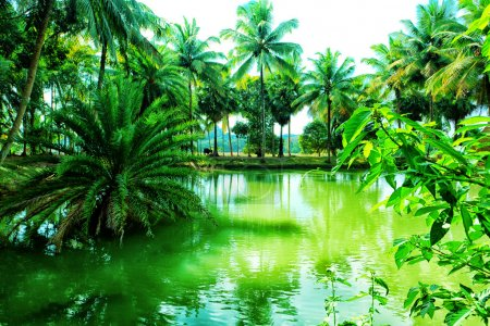 Photo for Picturesque tropical landscape with palms and bay. - Royalty Free Image