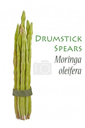Drumstick Spears also known as