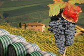 Vineyard in Chianti, Tuscany, Italy, famous landscape