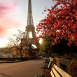 Famous Eiffel Tower with spring tree, Paris, Franc...