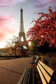 Famous Eiffel Tower with spring tree, Paris, France