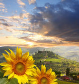 Chianti vineyard landscape with sunflowers in Tuscany, Italy