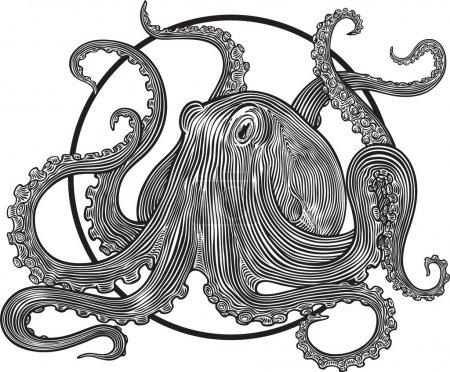 Illustration pour Illustration vectorielle avec gravure sur pieuvre. Cadre rond peut être retiré facilement - image libre de droit
