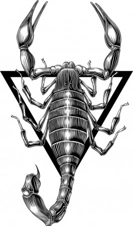 Illustration for Black and white vector image of scorpion engraving style. Frame can be removed easily - Royalty Free Image