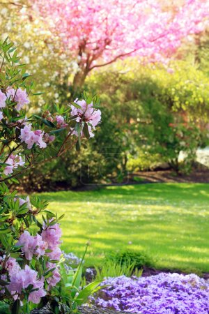 Photo for Beautiful park garden in spring. - Royalty Free Image