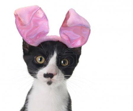 Easter bunny kitten