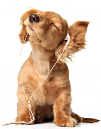 Photo for Young puppy listening to music on a head set. - Royalty Free Image