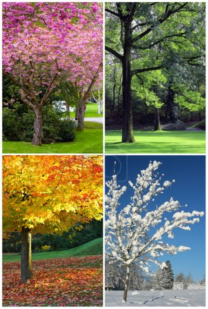 Photo for Four seasons collage: Spring, Summer, Autumn, Winter. - Royalty Free Image