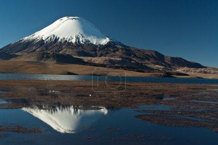 Photo pour Parc national de Lauca, lac Chungara et chapiteau de neige volcan Parinacota - image libre de droit