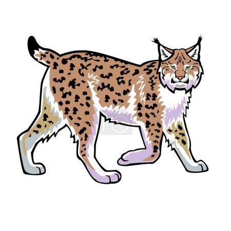 Illustration pour Lynx, chat sauvage, lynx, image vectorielle vue de côté isolée sur fond blanc - image libre de droit