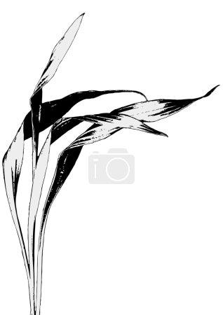 Illustration for Leaves - Royalty Free Image