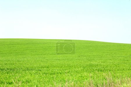 Panorama of a green meadow with blue sky
