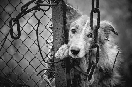Sad dog black and white