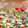Abundance of blooming wild flowers on the meadow a...