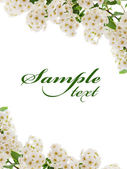 White flower border card