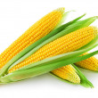 An ear of corn isolated on a white background...