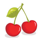 Cherry vector illustration