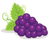 Redgrapes vector illustration