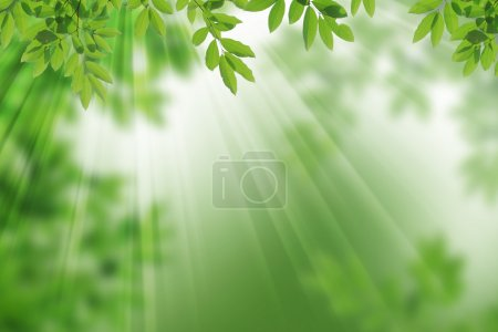 Photo for Tropical rainforest leaf frame. - Royalty Free Image