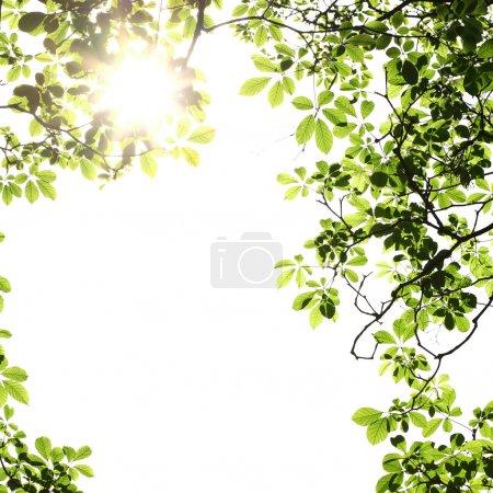 Blatt Hintergrund mit Sonnenstrahlen