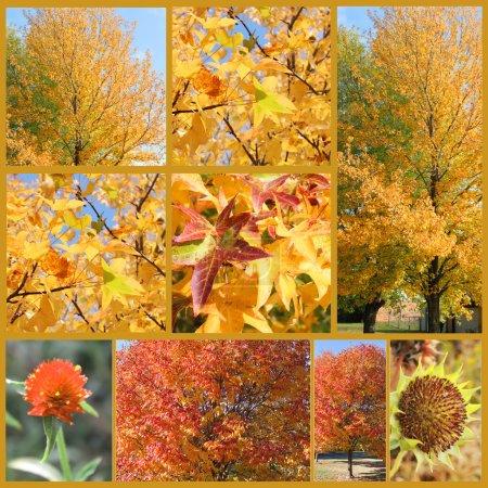 Photo pour Feuilles d'automne jaunes - image libre de droit