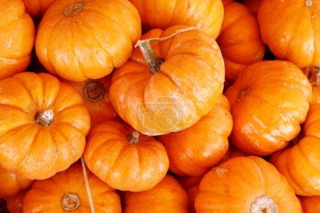 Many little pumpkins...