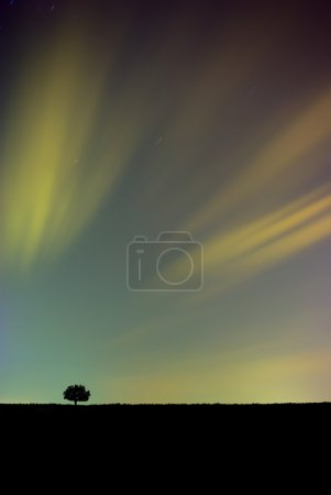 Colorful Night Sky with Tree