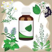 Léčivé byliny s lahví, vektorové ilustrace
