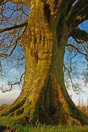Photo pour Tronc d'arbre - image libre de droit