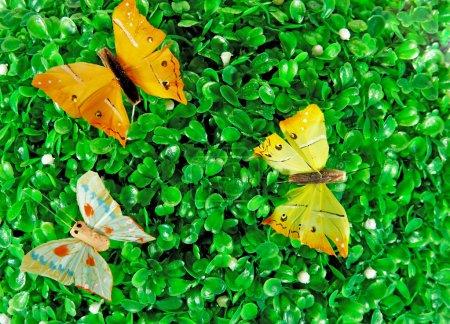 Бабочки на зеленых листьях