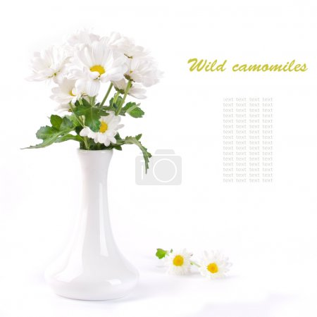 White flowers, field camomiles in a vase with a red tape