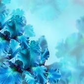 Modré kosatce proti zelené trávě, letní motýl