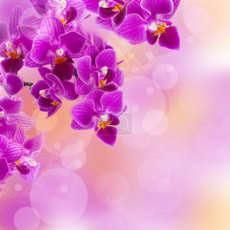 Pink orchids in the drops of dew