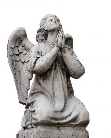 Photo pour Belle statue de l'ange priant. Isolé sur fond blanc - image libre de droit